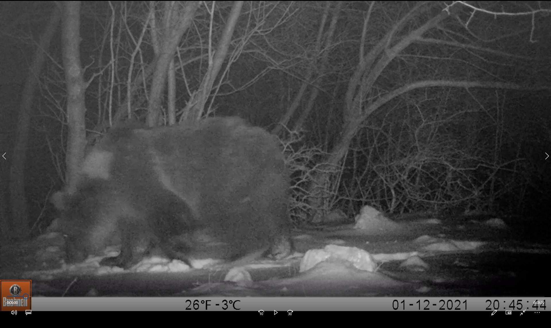 Snimak medvjeda sa foto-zamke (JU Priroda)